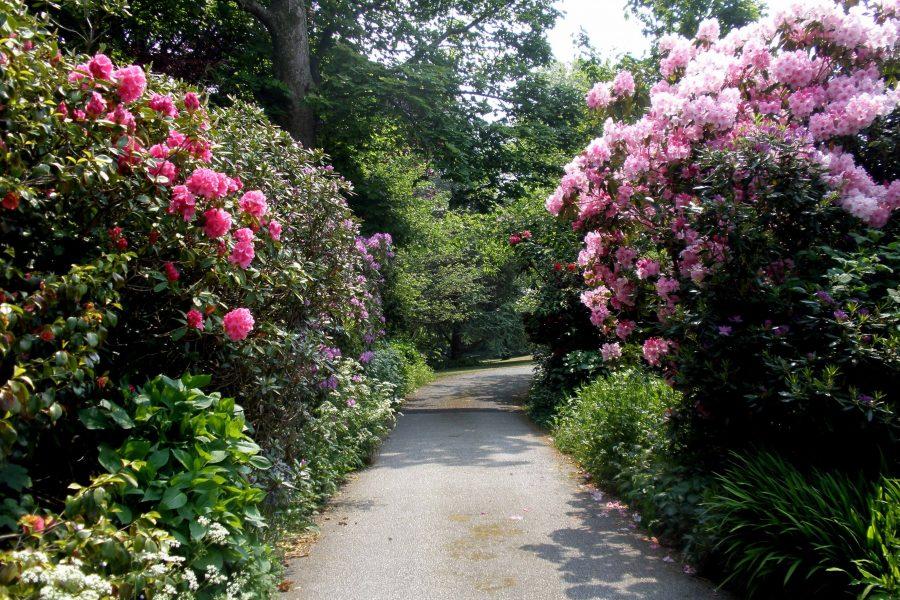 Bell Cottage Garden