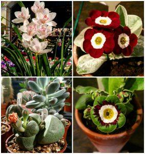 falmouth-spring-flower-festival-2017