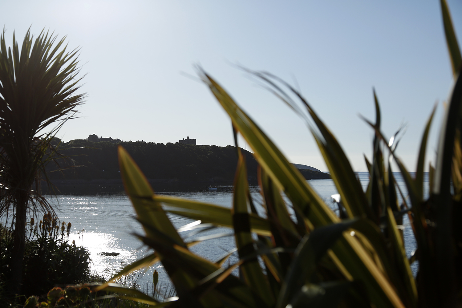 The silhouette of Pendennis Point in Falmouth through some foliage.